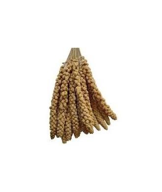 Millet en grappe