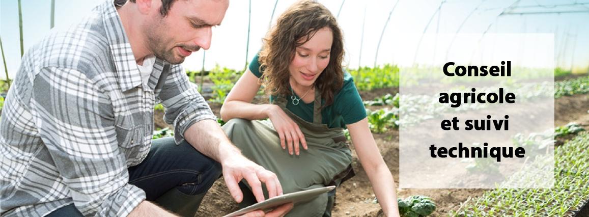 Conseil agricole et suivi technique